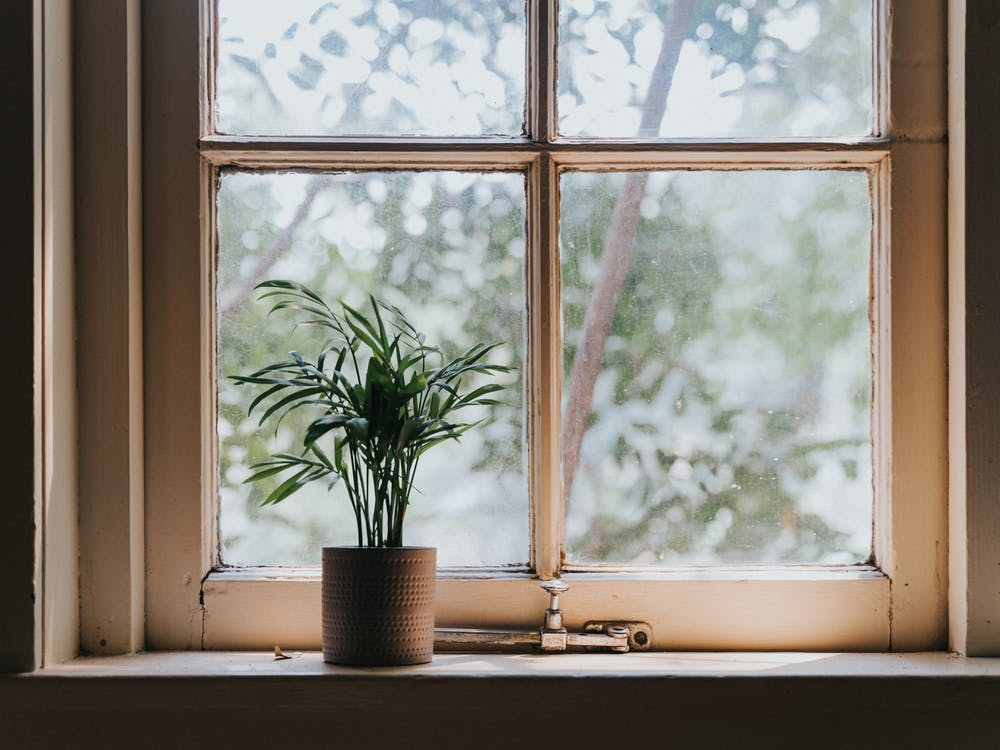 Green Potted Plant Beside Window