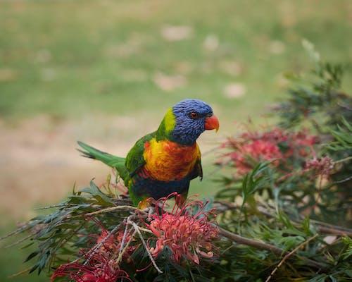 Multicolored Perched Bird