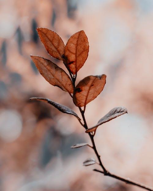 Immagine gratuita di all'aperto, autunno, foglia, foglie