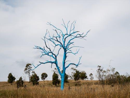 Immagine gratuita di alberi, albero, all'aperto, azzurro