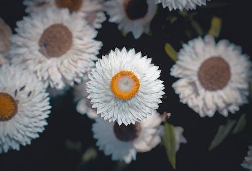 Immagine gratuita di all'aperto, bel fiore, fiore, giardino