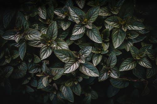 Immagine gratuita di all'aperto, foglia, foglie, giardino