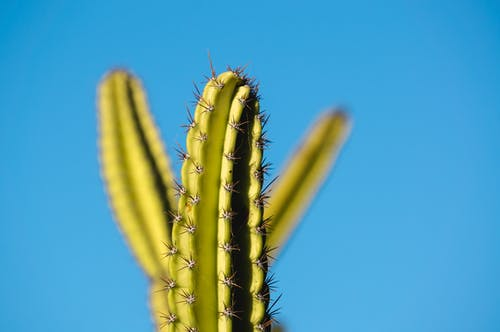 Free stock photo of beautiful sky, blue, blue sky, cactus