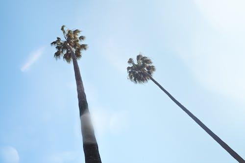Immagine gratuita di albero, all'aperto, botanico, foglia di palma