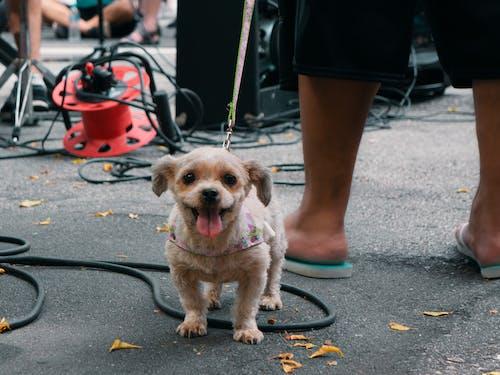 Immagine gratuita di animale domestico, cane, strada, via della città
