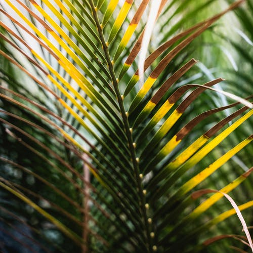 Free stock photo of botanic, botanic garden, garden, nature