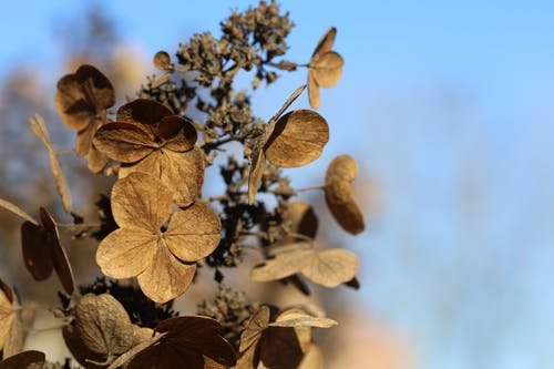 Free stock photo of autumn, dry flowers, flowers, nature