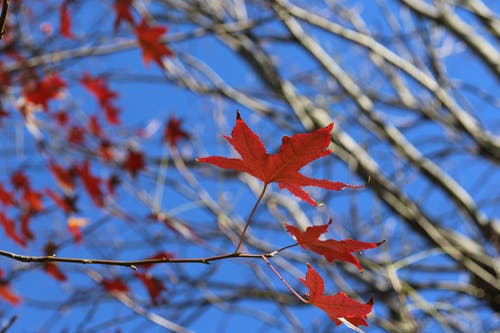 Free stock photo of autumn, leaves, nature, sky