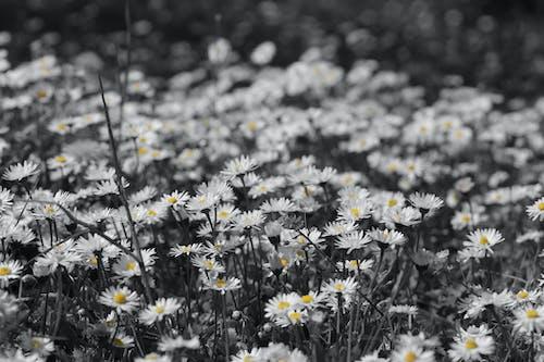 Free stock photo of flower field, flowers, grass, lawn