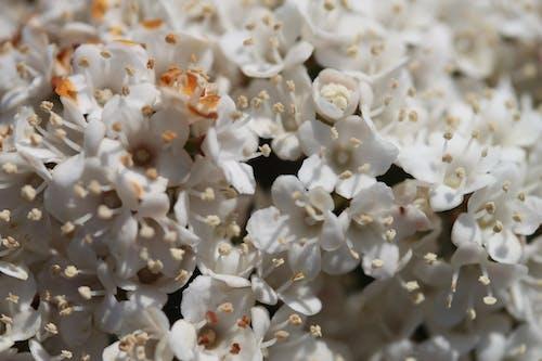 Free stock photo of flowers, macro, nature, primavera
