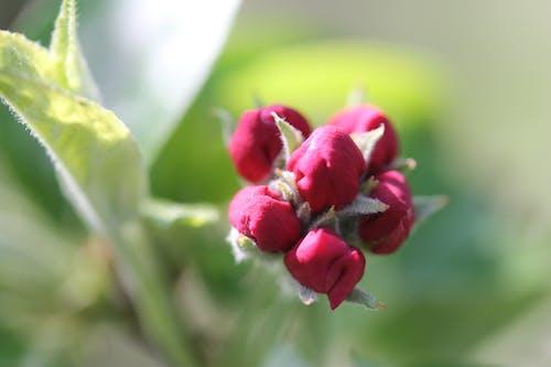 Free stock photo of flower, nature, primavera