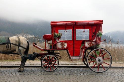 道路上的紅色和白色馬車
