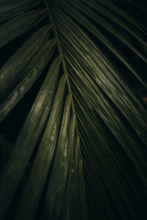 Close-Up Photo of Palm  Leaf