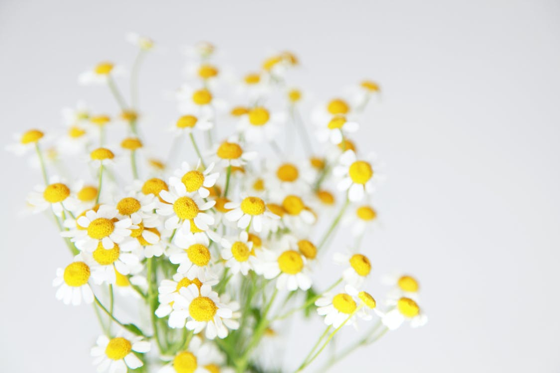Бесплатное стоковое фото с HD-обои, белые цветы, букет