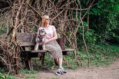 Free stock photo of animal, bench, blonde hair