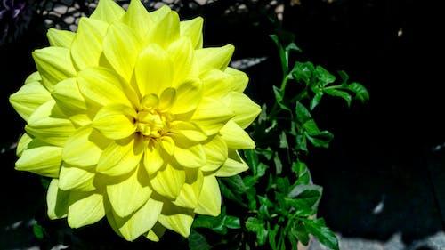 Желтый цветок с лепестками