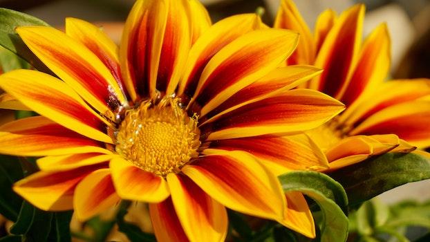 Free stock photo of flowers, petals, plant, blur