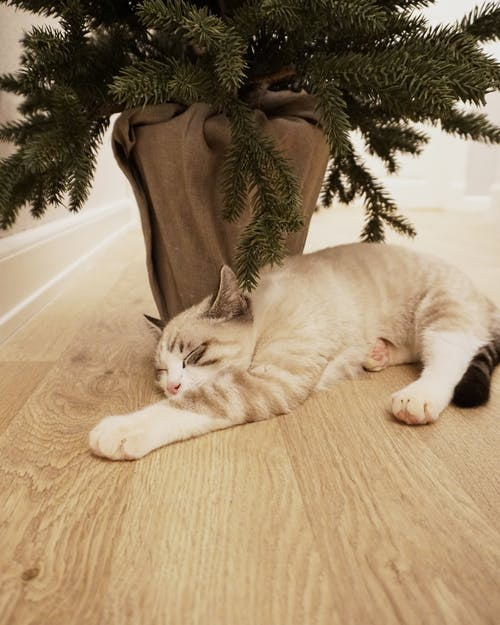 Photo Of Cat Laying Beside Pot