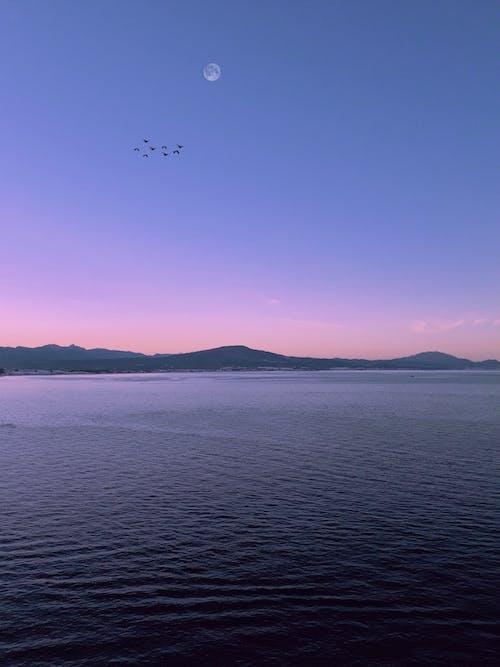 Free stock photo of beach, beautiful sky, birds, blue sky