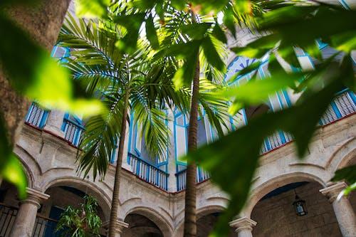 Green Palm Tree Near Brown Concrete Building