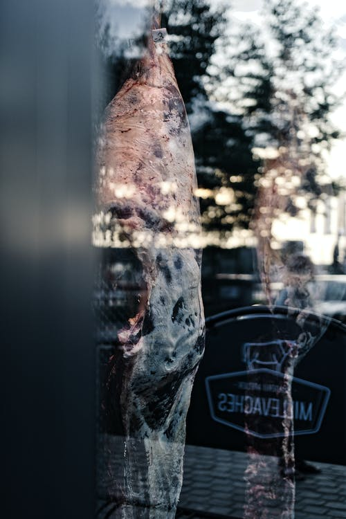 Free stock photo of cow, meat, through a window