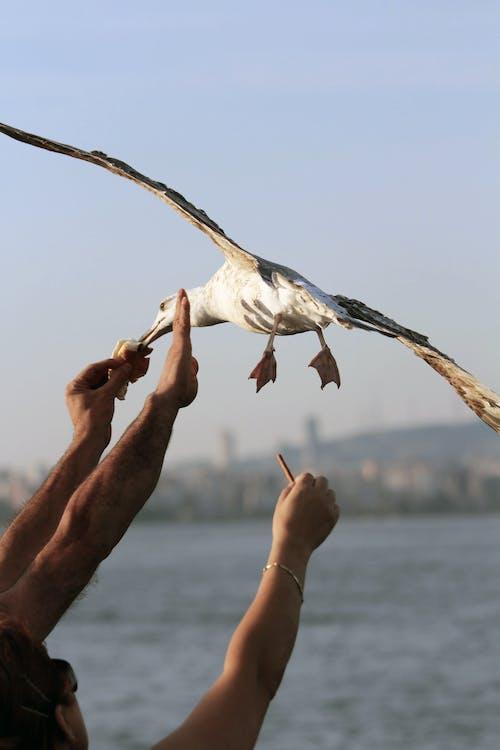 Person Feeding White and Black Bird
