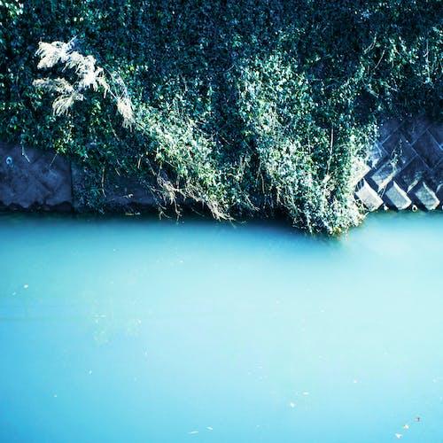 河, 綠色 的 免費圖庫相片