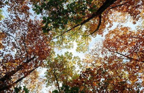 Foto profissional grátis de amarelo, árvores, atraente, aumento