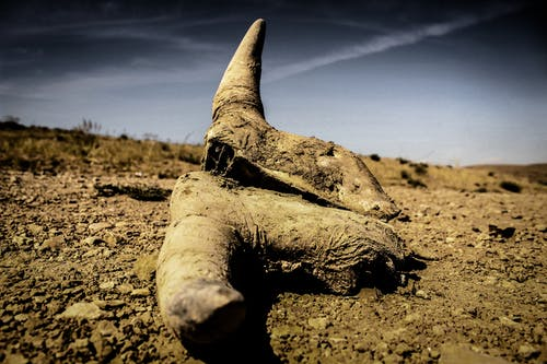 Ilmainen kuvapankkikuva tunnisteilla lehmän kalloja, ulkoilma