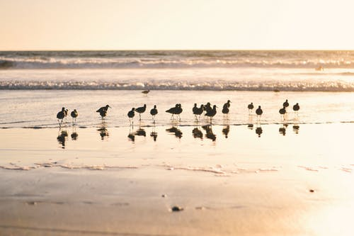 Základová fotografie zdarma na téma Kalifornie, los angeles, pláž, plážový západ slunce