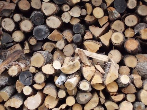 Gratis lagerfoto af træ