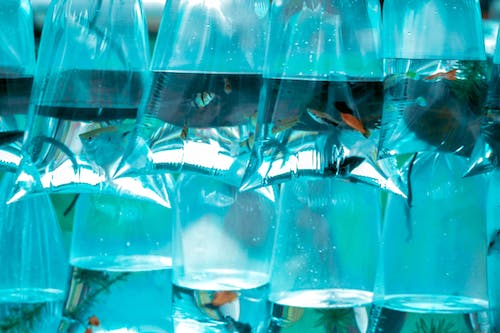 Free stock photo of aquarium, fish pond, fishes