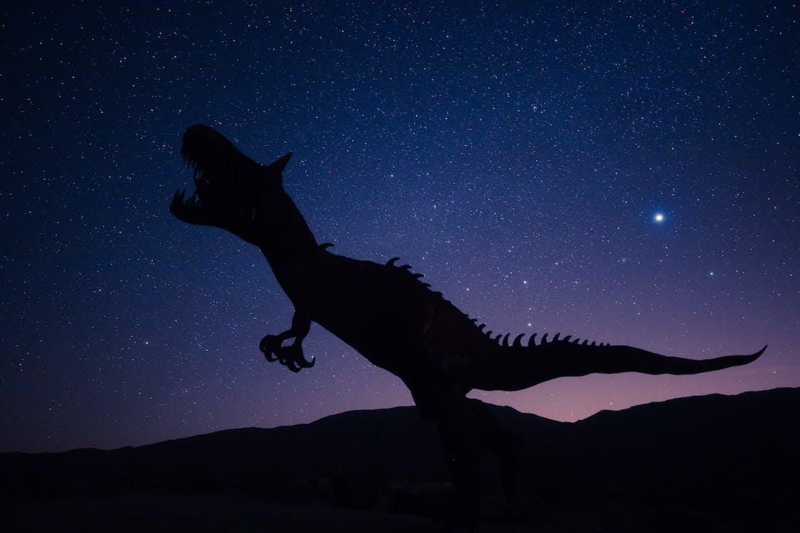 Silhouette Of Dinosaur on Night Sky