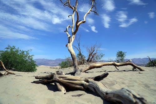 ağaçlar, çöl, doğa içeren Ücretsiz stok fotoğraf