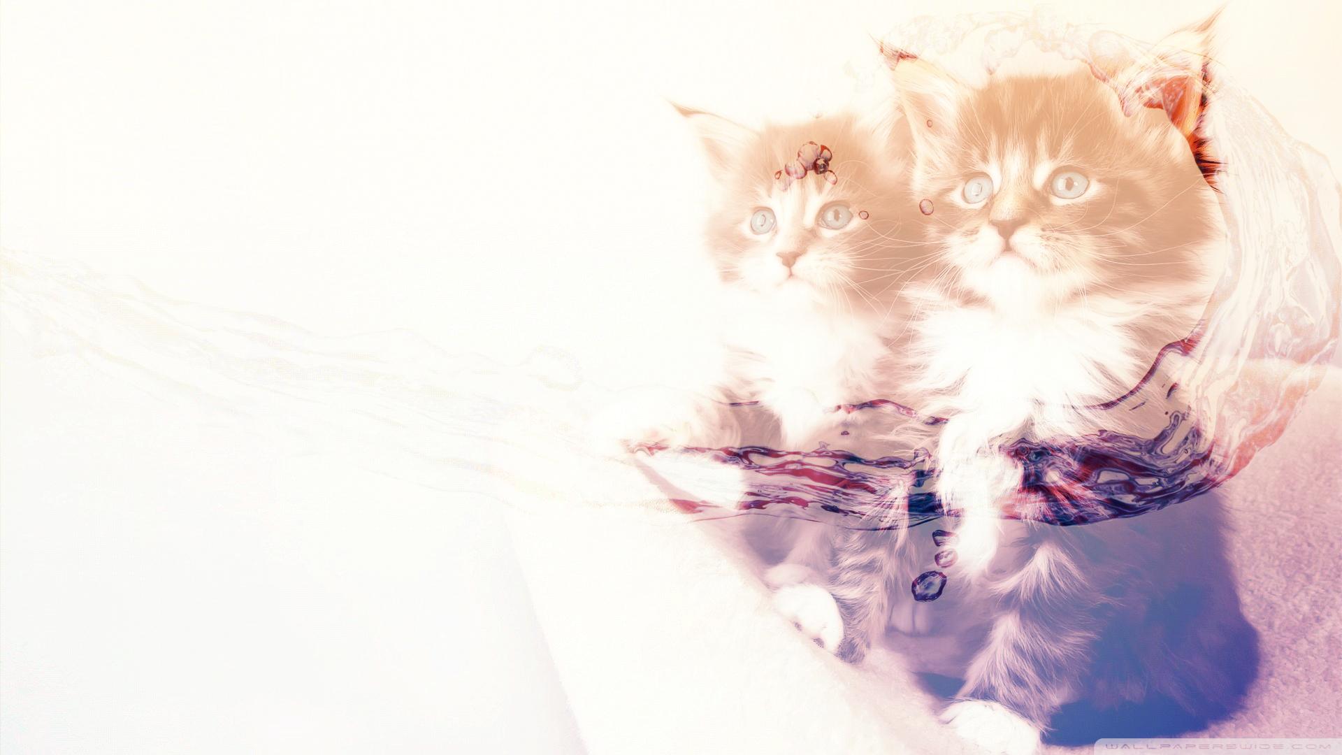 Hdの壁紙 かわいい動物 ネコの無料の写真素材