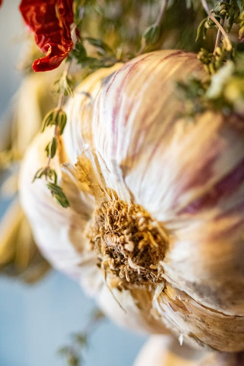 Photo Of A Fresh Garlic