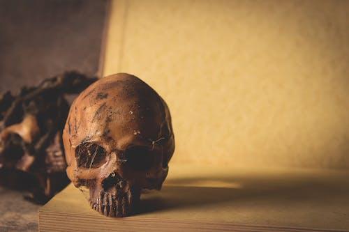 Immagine gratuita di corpo, cranio, fotografia, morte