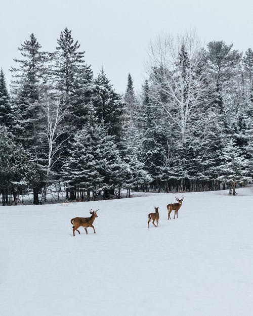 Photo Of Deer On Snow Field