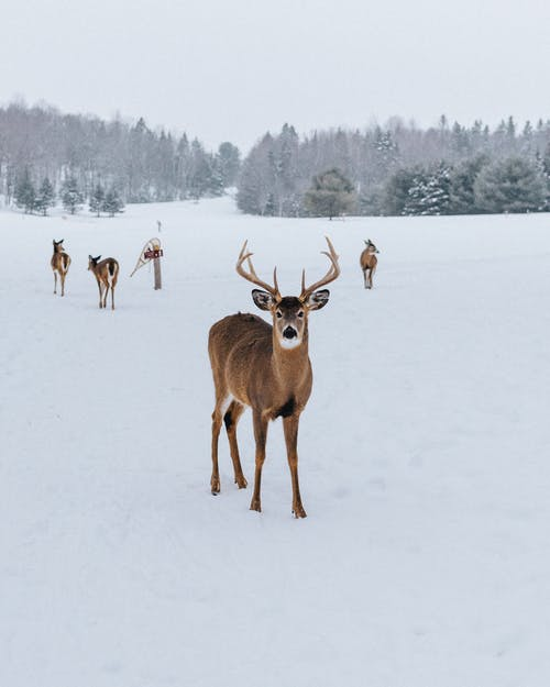 Photo Of Deer On Snowfield