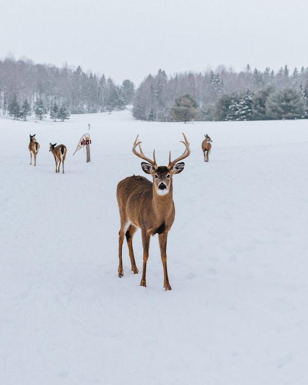 Photo Of Deer On Snowfield
