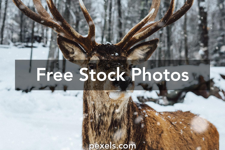 250 Beautiful Religious Photos Pexels Free Stock Photos: 250+ Beautiful Noble Deer Photos Pexels · Free Stock Photos