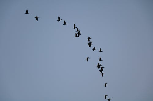 Безкоштовне стокове фото на тему «#birds, #sky»