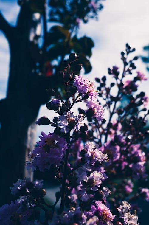 açık hava, çiçek, doğa, gökyüzü içeren Ücretsiz stok fotoğraf