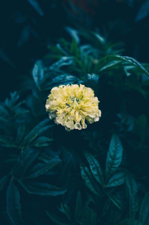arka fon, çiçek, çuha çiçeği, doğa içeren Ücretsiz stok fotoğraf