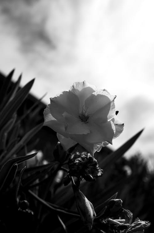 açık hava, bitki, çiçek, doğa içeren Ücretsiz stok fotoğraf
