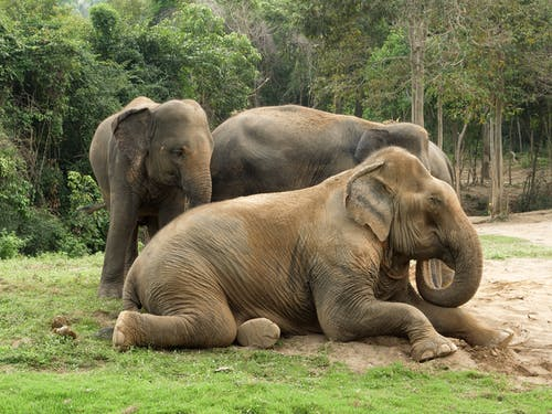 Photo Of Elephants Sitting On The Ground