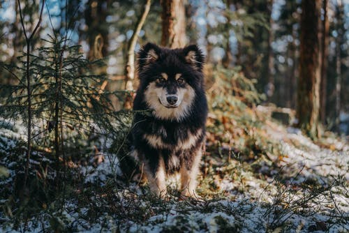Black and Brown Dog on Forest