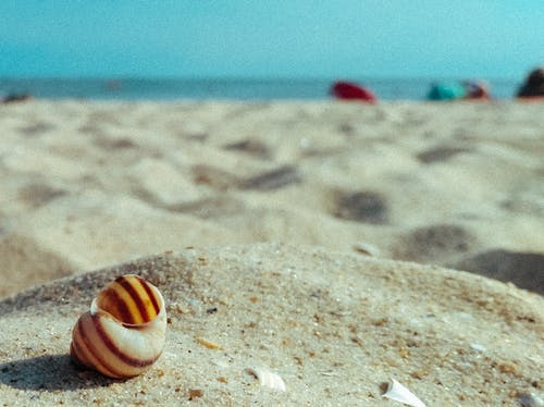 Brown and White Seashell on Brown Sand