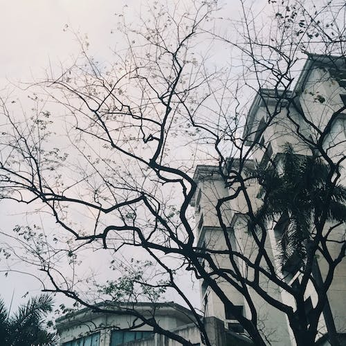 Free stock photo of branches, building, photograph