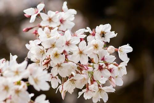 Photos gratuites de abeille, beauté dans la nature, beauté de la nature, croissance